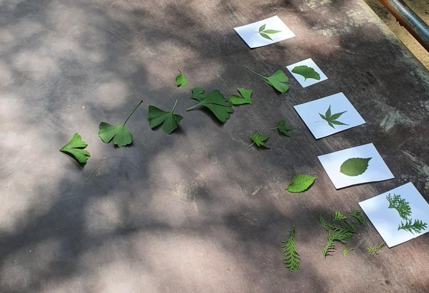 나뭇잎 찾기 놀이